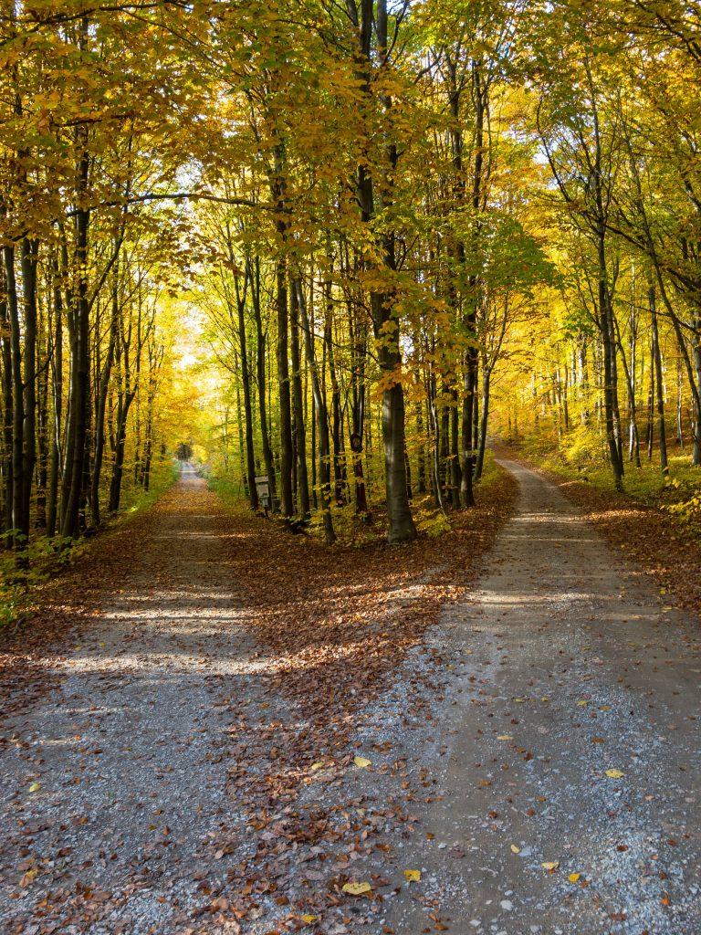 Off road pathways